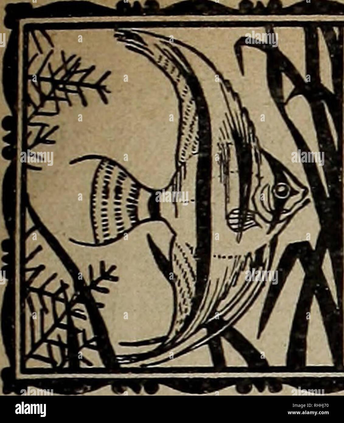 """. Blätter für Aquarien- und Terrarien-Kunde. attLt. .***. ≫ • ** •*"""""""". S/fixe^ Iquexmötv - xjlvxö. Bitte beachten Sie, dass diese Bilder sind von der gescannten Seite Bilder, die digital für die Lesbarkeit verbessert haben mögen - Färbung und Aussehen dieser Abbildungen können nicht perfekt dem Original ähneln. extrahiert. Stuttgart Stockfoto"""