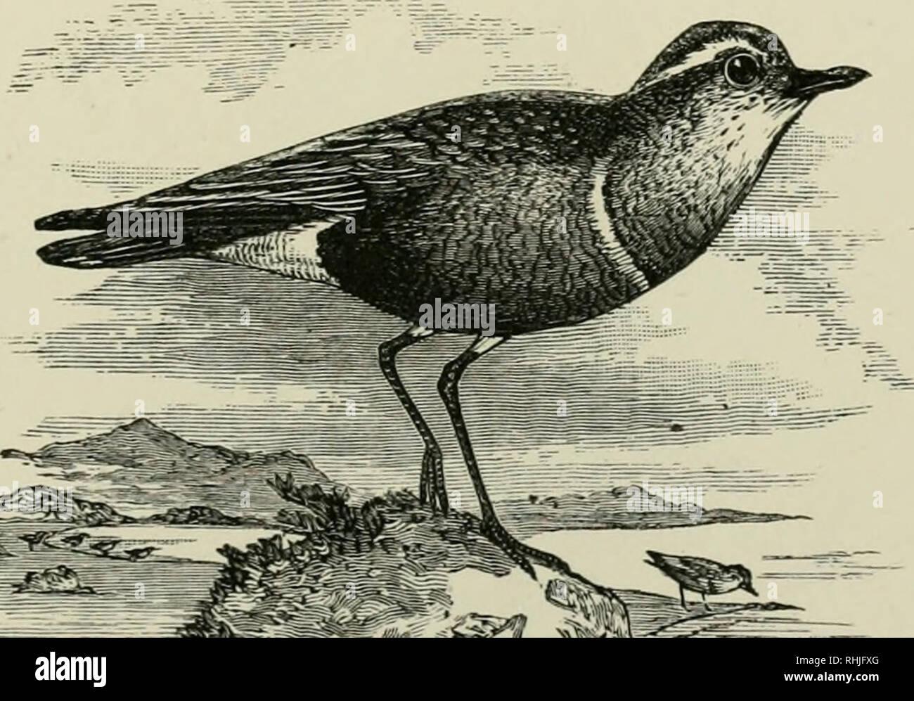 Vögel datieren Website Neue Dating-Website in der Welt