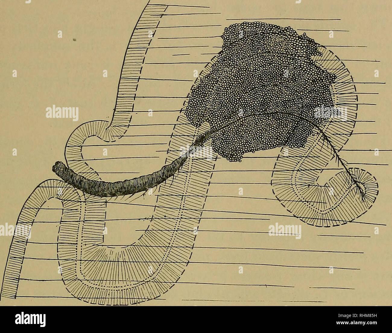 Bilder Seite 22 Sperm The Stockfotosamp; Alamy Its f6gyb7