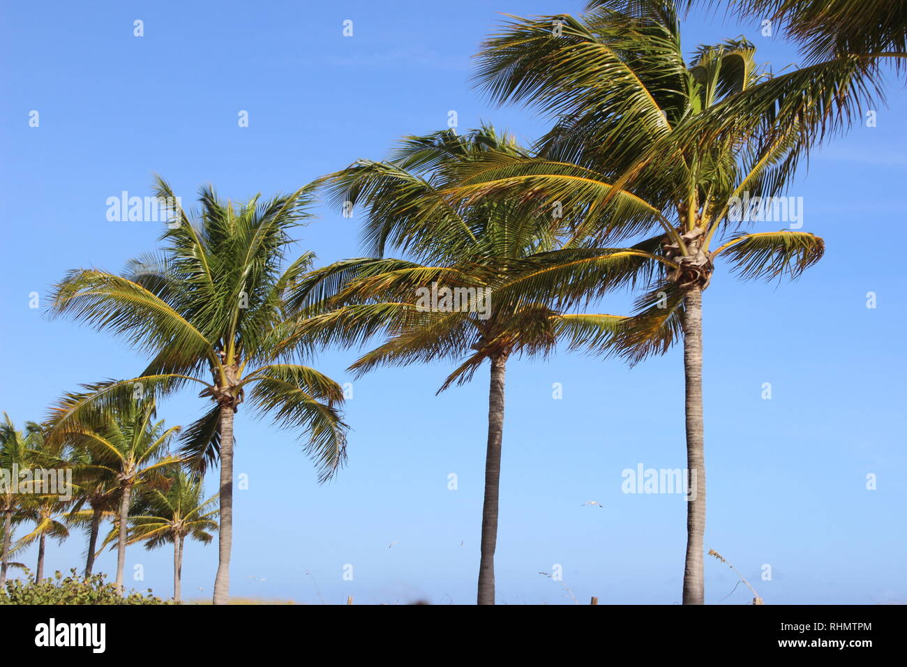 Alle beach themed in Florida Fort Lauderdale Beach. Stockfoto