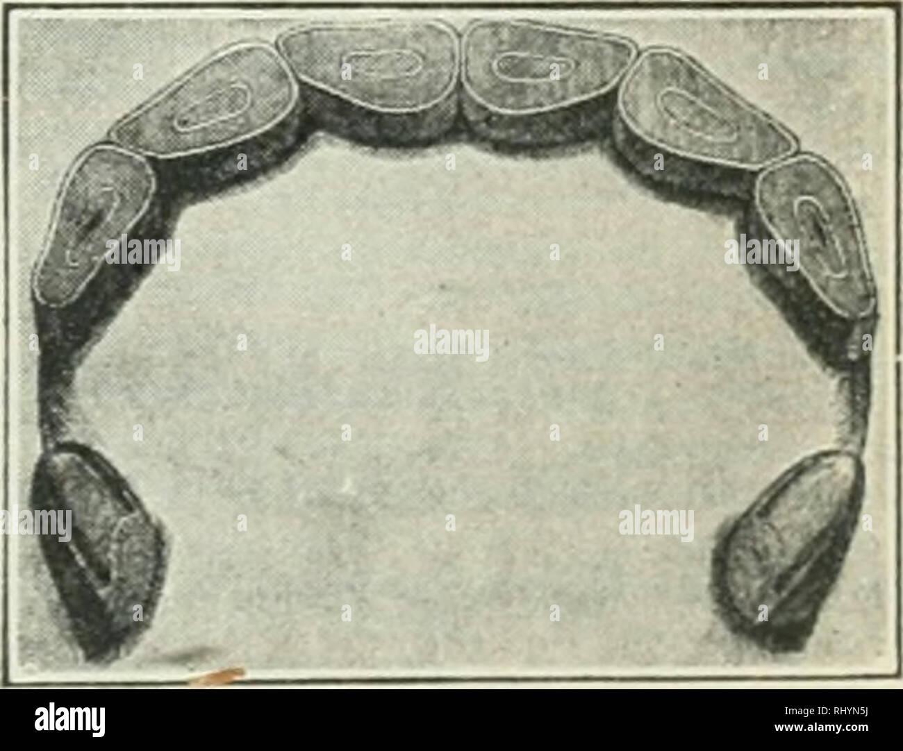 . Anfänge in der Tierhaltung. Vieh und Geflügel. Abb. SO. S Jahre alt.. Bitte beachten Sie, dass diese Bilder sind von der gescannten Seite Bilder, die digital für die Lesbarkeit verbessert haben mögen - Färbung und Aussehen dieser Abbildungen können nicht perfekt dem Original ähneln. extrahiert. Plumb, Charles Sumner, 1860-1939. St. Paul, Minn: Webb Pub. Co. Stockfoto