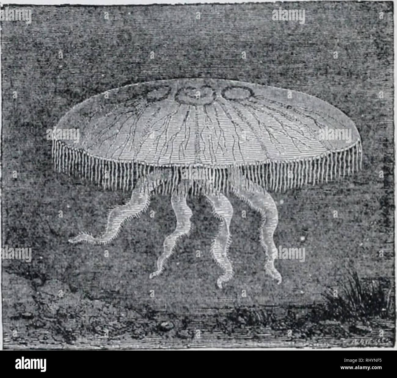 Kolonie Von Hydroiden Stockfotos und  bilder Kaufen   Alamy