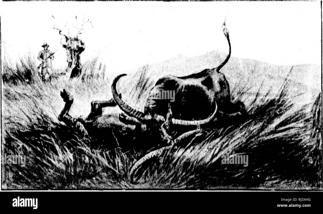 Geschwindigkeit datiert Büffel