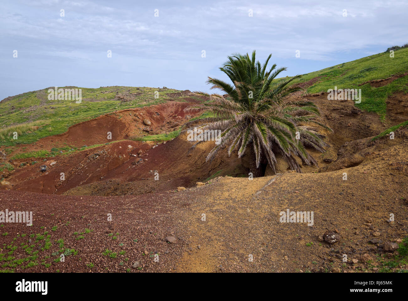 Portugal, Madeira, Palme, Halbinsel, vulkanisch Stockbild