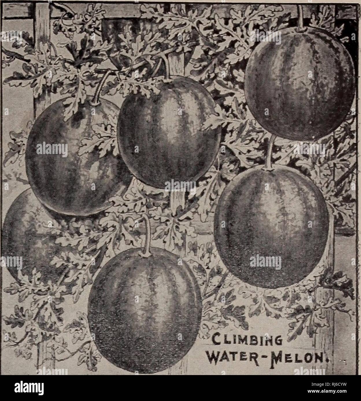 Childs Seltene Blumen Gemüse Und Obst Verkaufskataloge Samen