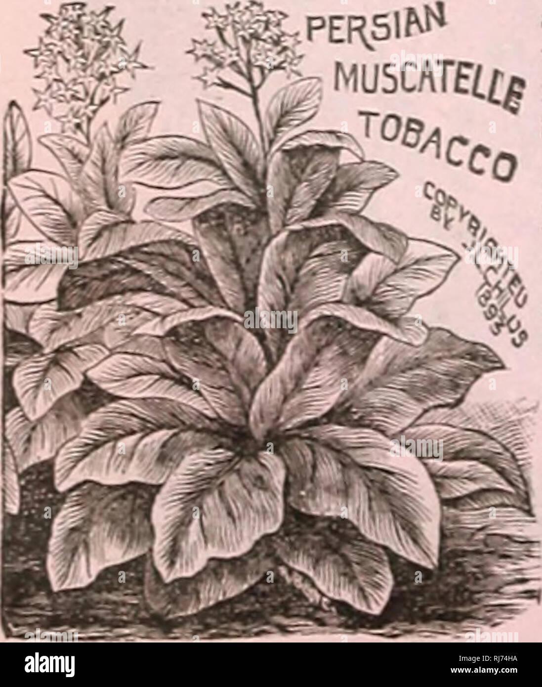 Childs Seltene Blumen Gemüse Und Obst Für 1906 Verkaufskataloge