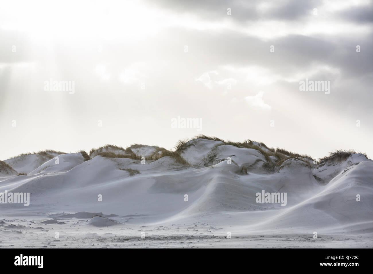 Deutschland, Norddeutschland, Amrum, Dünen im Licht, Detail Stockbild