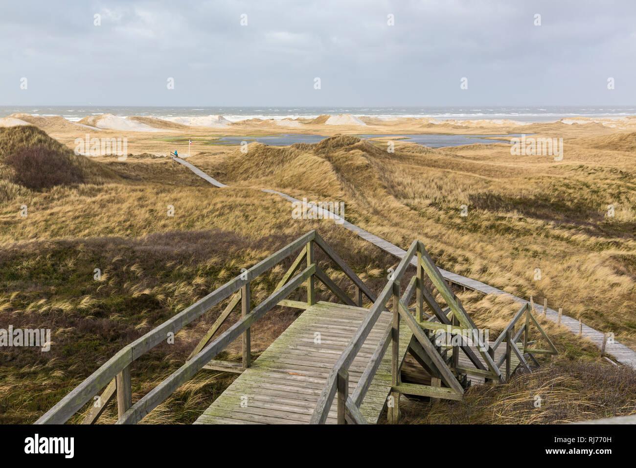 Deutschland, Norddeutschland, Amrum Bohlenweg durch die Dünenlandschaft Stockbild