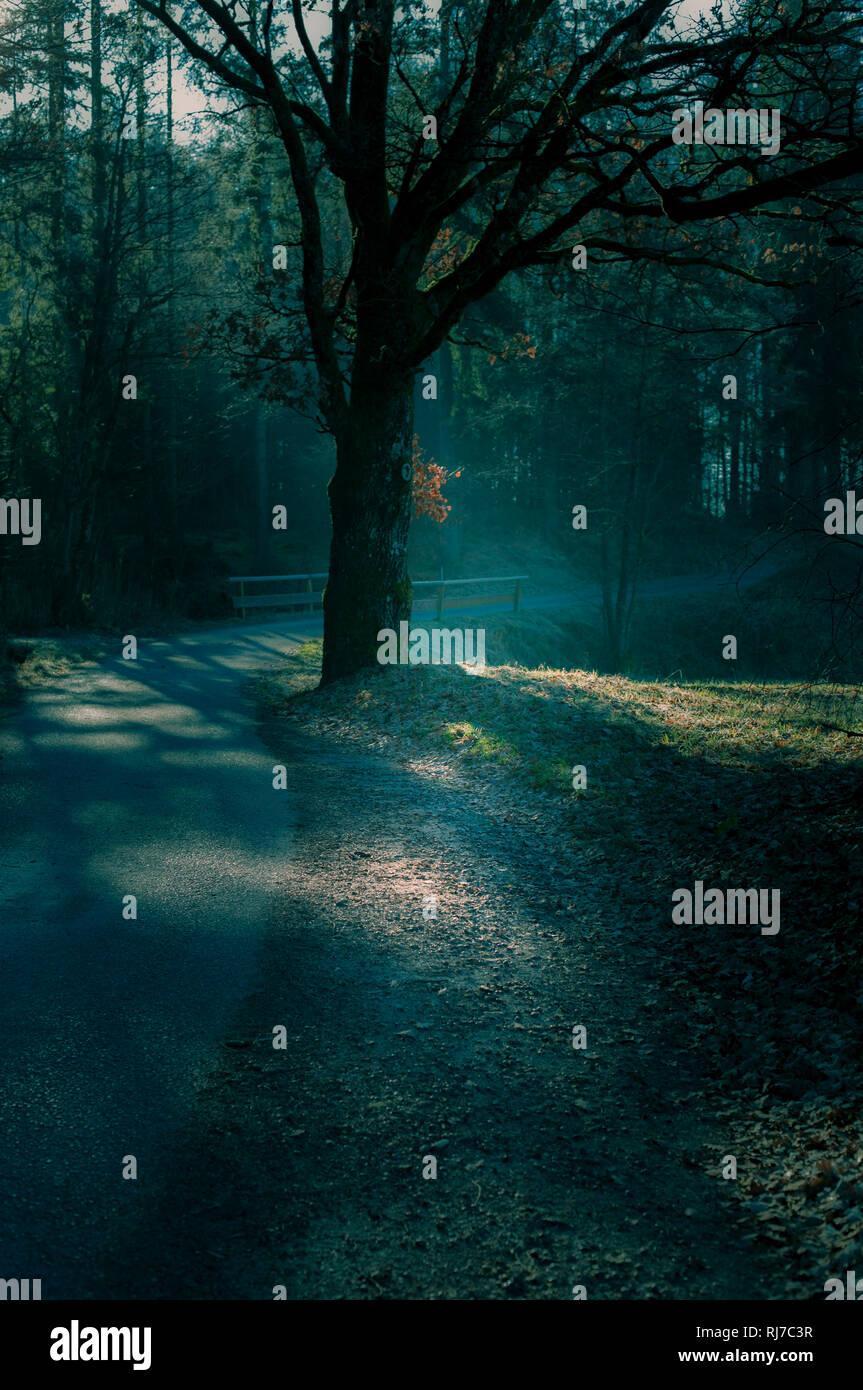 Ein einzelner Baum einem Weg durch den Wald, Crossentwicklung, Stockbild