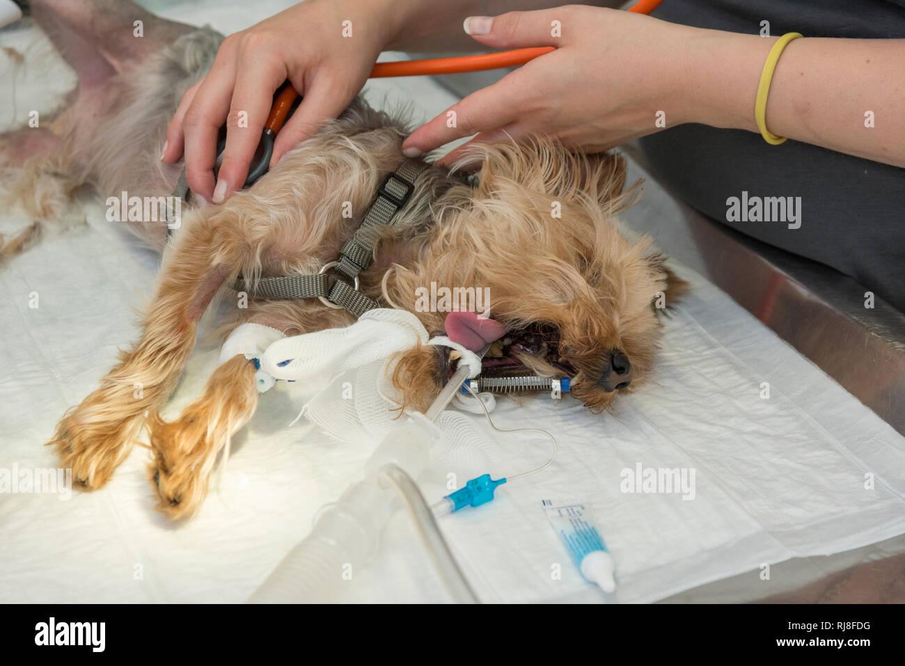 Tierarzt datiert einen Kunden