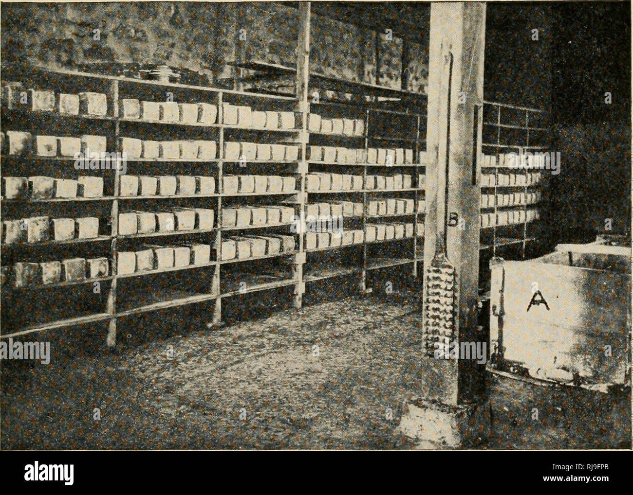 Die Herstellung Von Kase Schaukaserei Aushartung Keller In