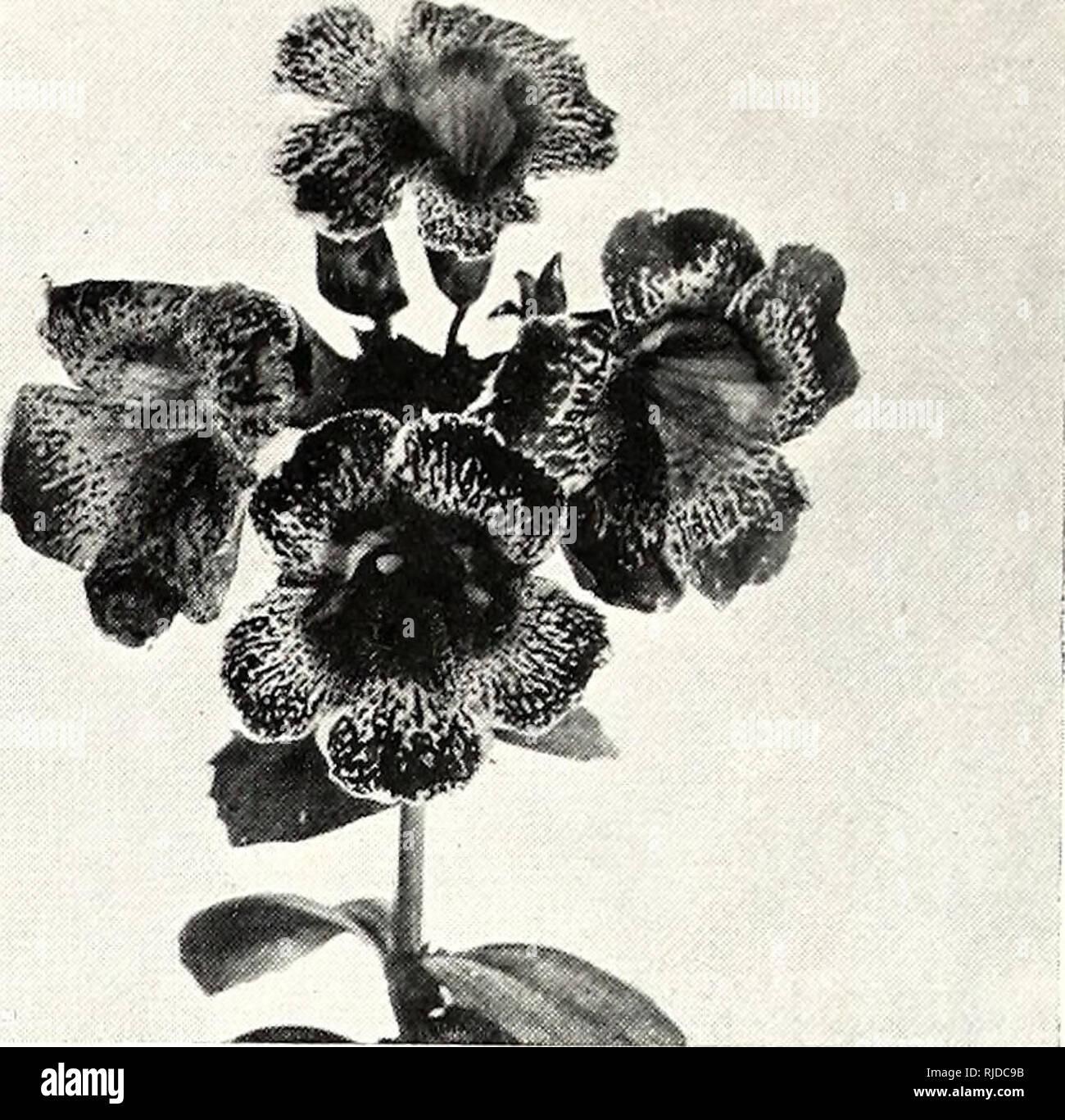 Das Jahrhundert Buch Des Im Garten Arbeitens Eine Umfassende Arbeit
