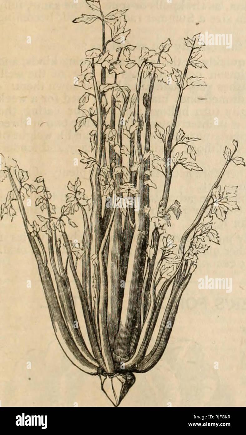 Katalog Der Gemüse Und Blumensamen Kostenlos Für Alle