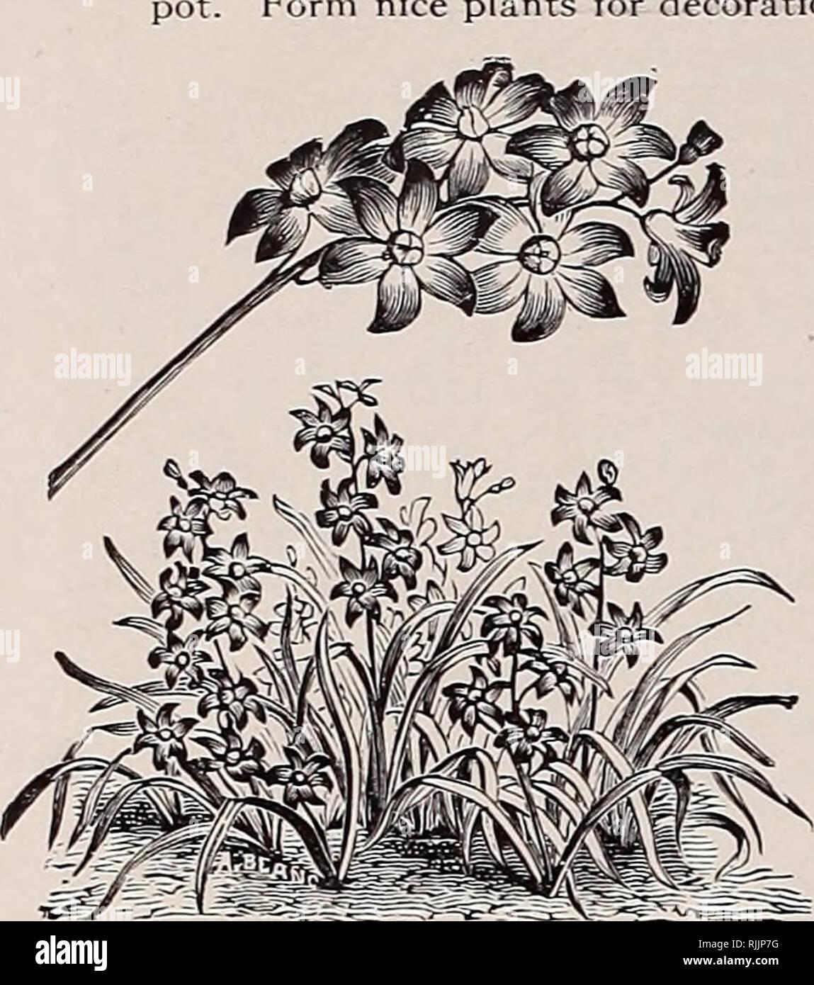 Beckert Die Glühbirne Katalog Herbst 1914 Baumschulen Gartenbau