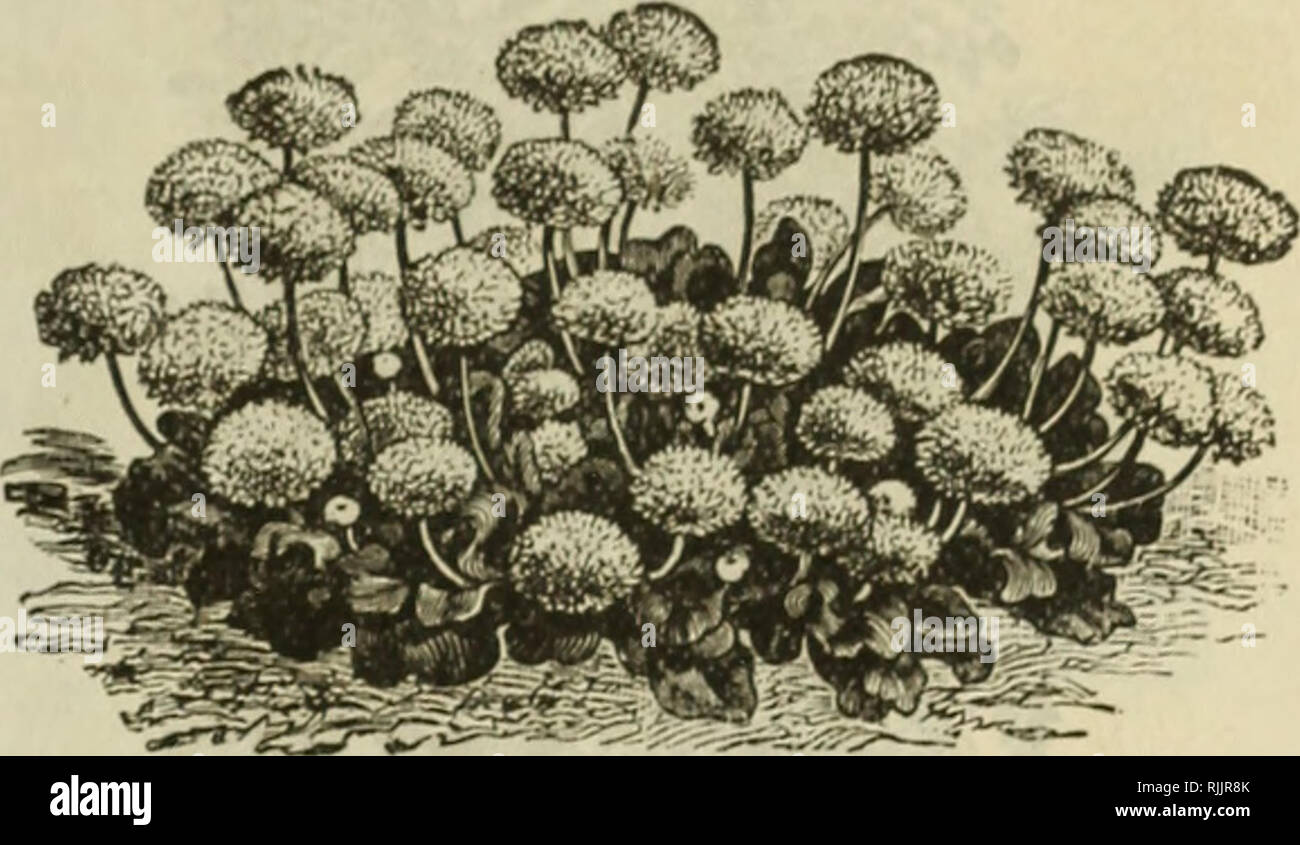Schöne Blumen Frühjahr 96 Baumschulen Iowa Cedar Falls Kataloge