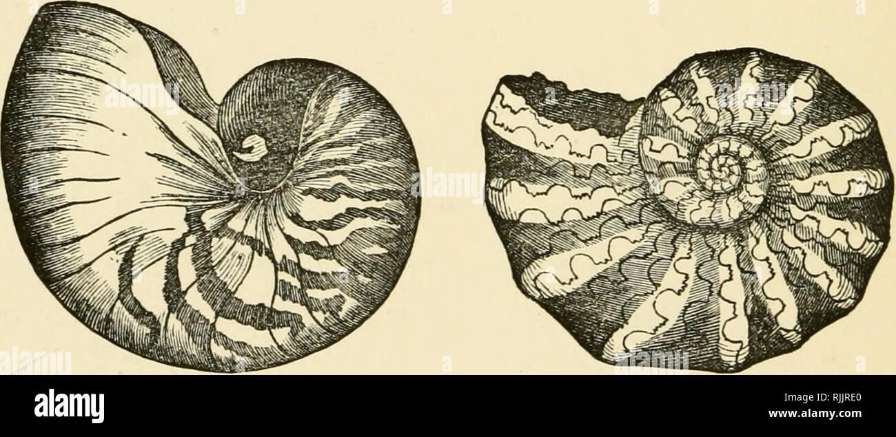 Schöne Muscheln Ihre Art Struktur Und Verwendet Im