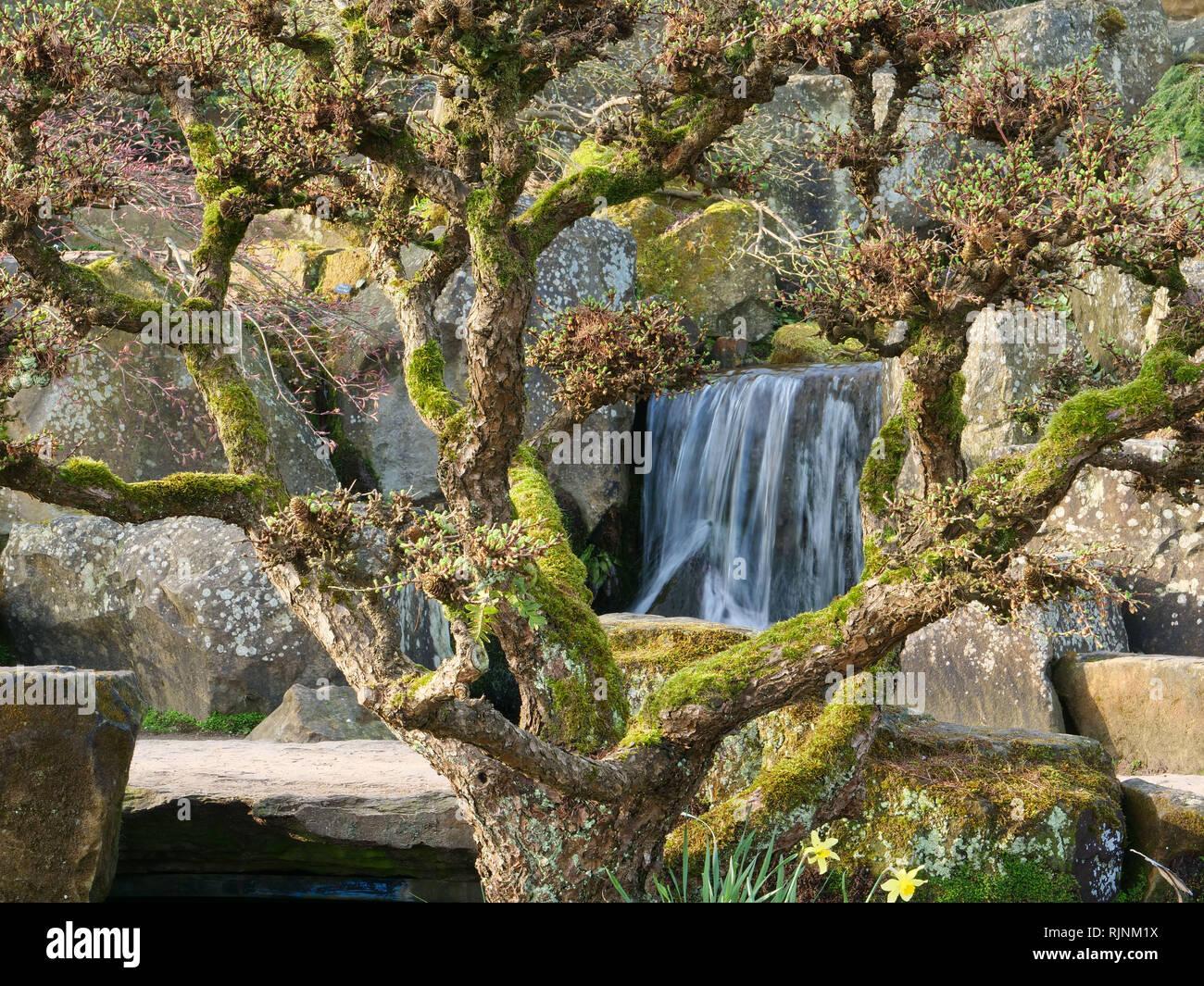 Wasserfälle In Einem Kleinen Bach Im Garten Machen Das