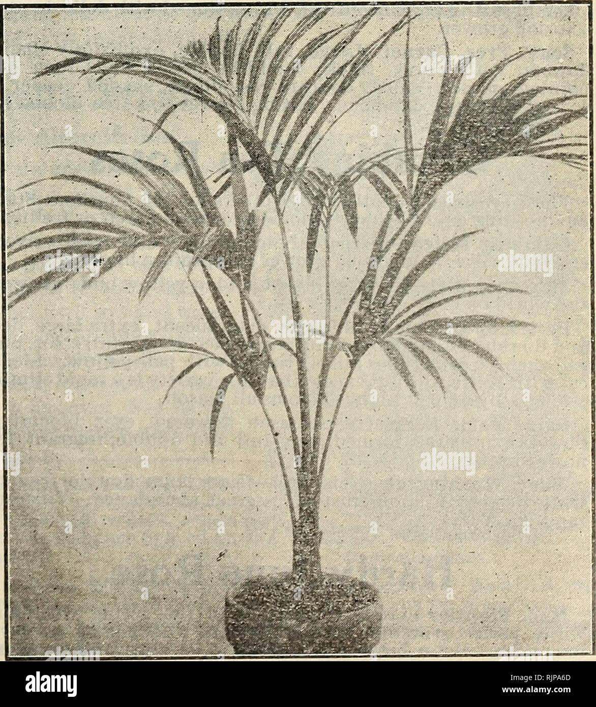 Herbst Katalog Blumenzwiebeln Pflanzen Und Samen Samen Kataloge