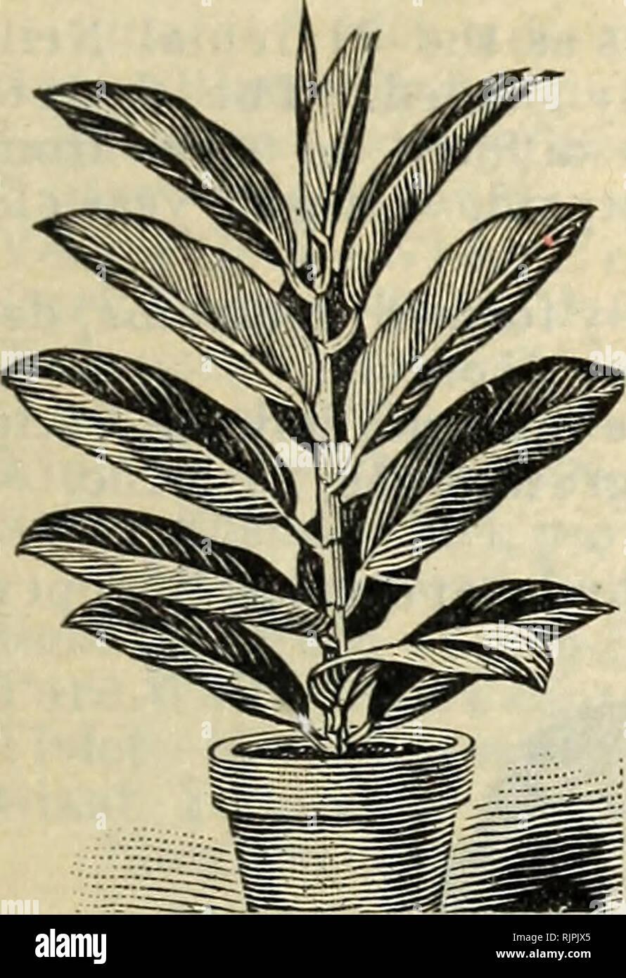 Herbst 1902 Blumenzwiebeln Pflanzen Und Samen Samen Kataloge