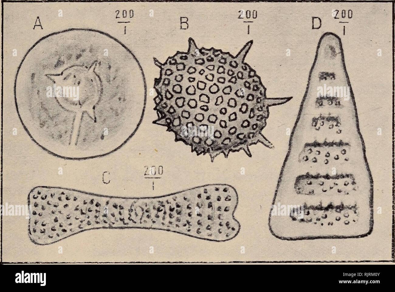 Febr. 2019. Fossilien erlauben Forschern Einblicke in längst vergangene Zeiten.