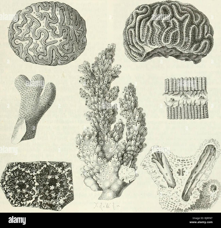 ". Aus der Heimath. Natural History; Natural History -- Deutschland. 281 282 (Sk-unbflà ¤ c^e fefi autTittenbeit Ãaibc gtcidjt, batb-fic^ btc Dberflà ¤ dje beffelbcn mit äa^ lveidjeit jierlid) gcfammcrten furjcn btcfen 9 (Rmen ober fleinen oielfad) ginvunbeuen ® c=birgà ¤ fämmcn bebccft jcigt. 3""^^*""''^^6^^-li'*^'La ""^ii ""C ÜLG langem unb e8288'ägeWctgen, £) t biefe © vunbfovm in Btc anbere über. Ferà Tiiefe, Bic ¤ ficltc ® ef} a (tuiig à ¤ ljnclt inkl) v 1963 23u [d) e Ali 1963 ijiaume, Ba fetten ein â ¬ tvimm bcutlid) auà ¤ gelnlbet ift, [onbevn Ba8 ® Cà ¤ ftfofortanbei-3 tnl) aftiingà ¤ j. 2?. bic (SIc Stockbild"