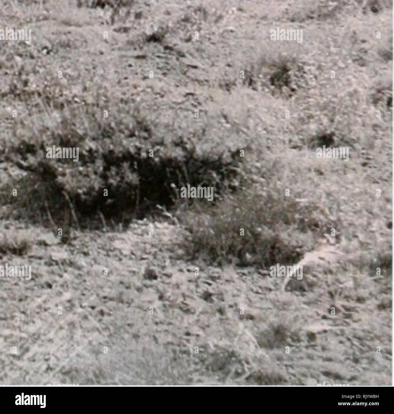 . Asiatische herpetologischen Forschung. Reptilien -- Asien Zeitschriften; Amphibien -- Asien Zeitschriften. --** Abbildung 5. Lebensraum und geben Sie den Ort von Eremias (Eremias) Montanus. 60 km nordöstlich von Kermanshah, Nähe von Siah-Darreh Dorf, Kermanshah Province, Western Iran. Etymologie: Eremias montanus wird so genannt, da es anscheinend in der Verteilung auf die Berggebiete und die bergige Steppen der nordöstlichen Regionen von Ker eingeschränkt - manshah Provinz, westlichen Iran. Taxonomische Konto: Wie bereits erwähnt, bisher die umfassendste Arbeit über die komplizierte Gattung von Eremias (Sensu lato) ist von szczerbak ( Stockbild