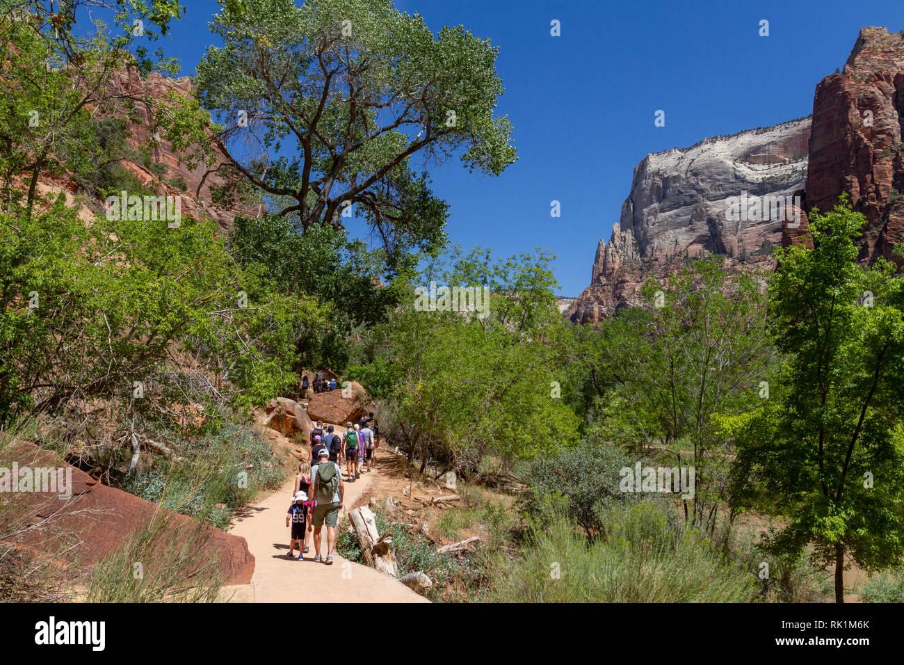 Wanderer auf Emerald Pools Trail neben dem Virgin River in der Nähe des Zion Lodge, Zion National Park, Utah, United States. Stockbild