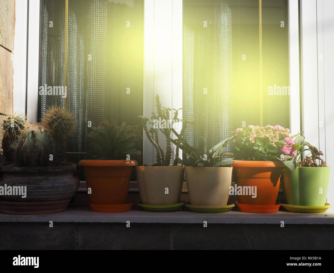 Garten Container In Der Nähe Von House Töpfe Von Pflanzen Sind Auf