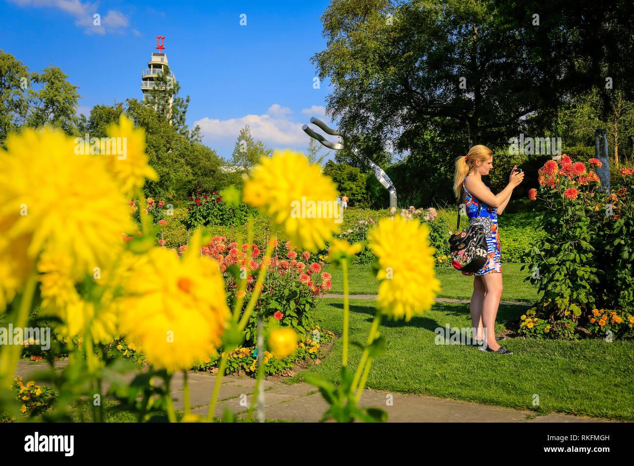 Essen, Nordrhein-Westfalen, Ruhrgebiet, Deutschland, Grugapark, Park der Bundesgartenschau 1965, blühende Dahlien mit Blick auf den Gru Stockbild