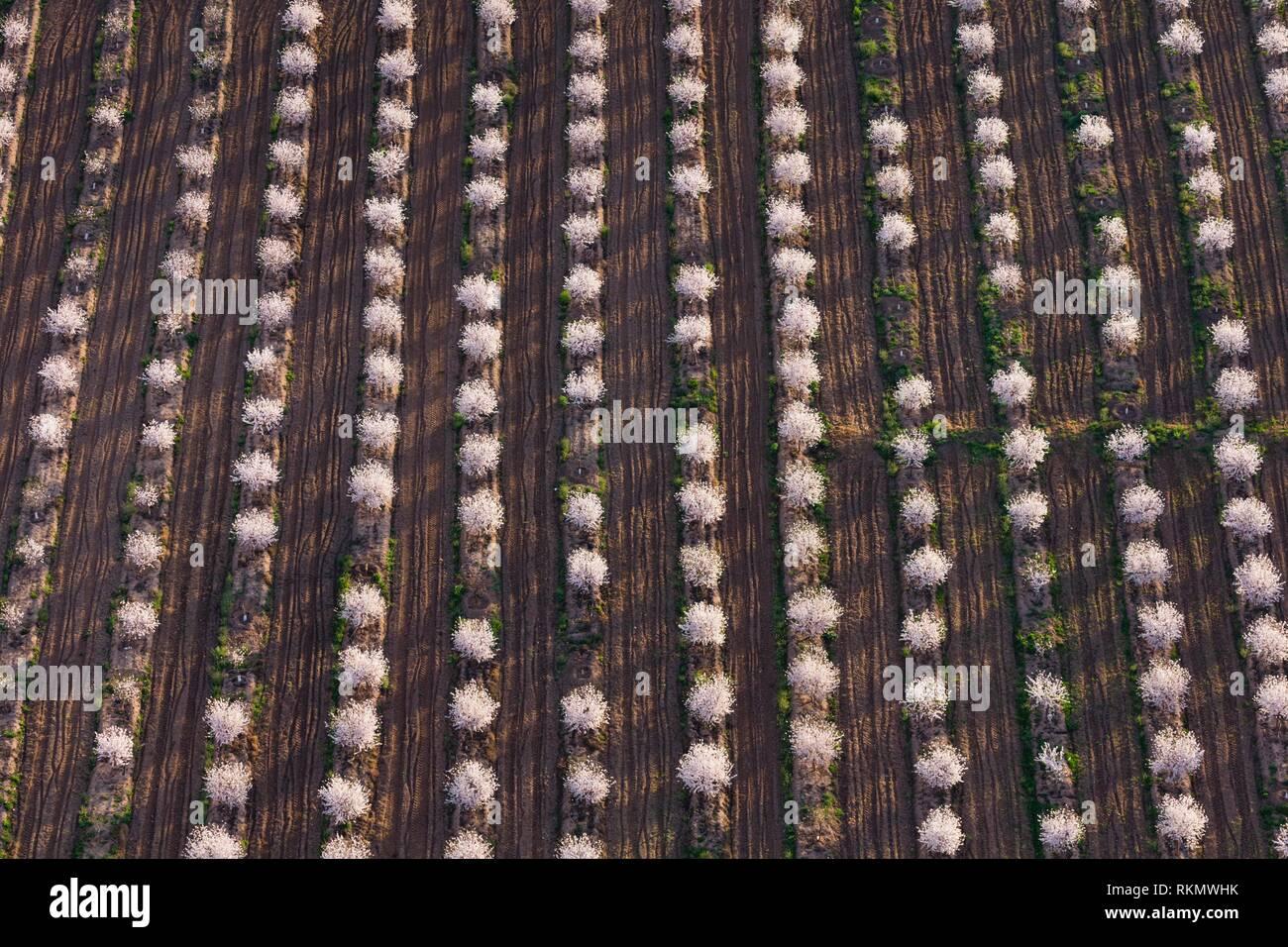 Blüte, Frucht Baum, Fruiturisme, Tourismus, aitona Dorf, Baix Segre, Lleida, Katalonien, Spanien, Europa. Stockbild