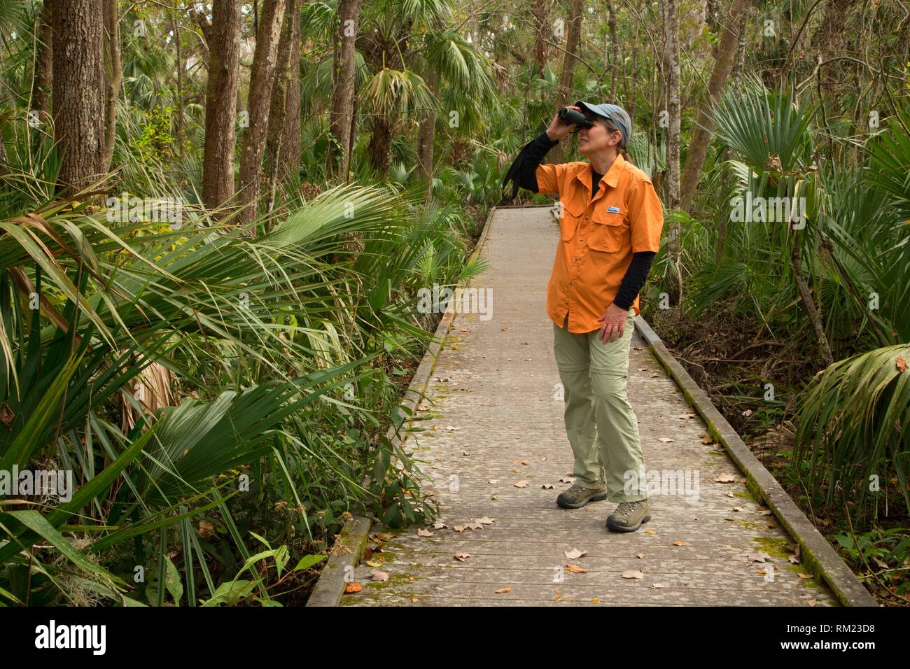 Biodiversität Loop Boardwalk, Enchanted Forest Sanctuary, Florida. Stockbild