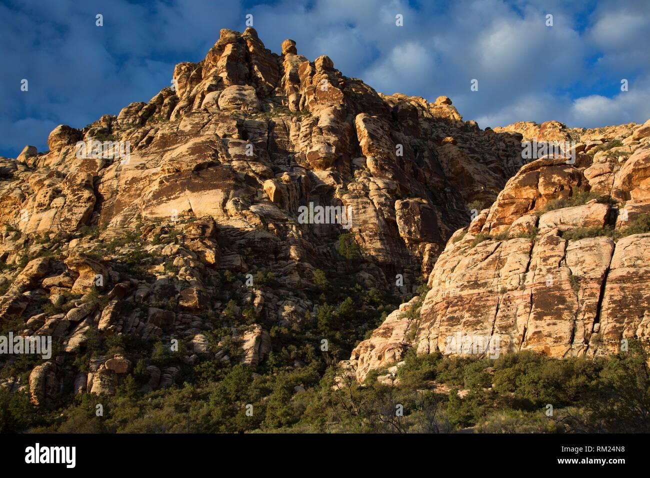 Sandstein Klippen an der Weide Frühjahr/Lost Creek, Red Rock Canyon National Conservation Area, Nevada. Stockbild