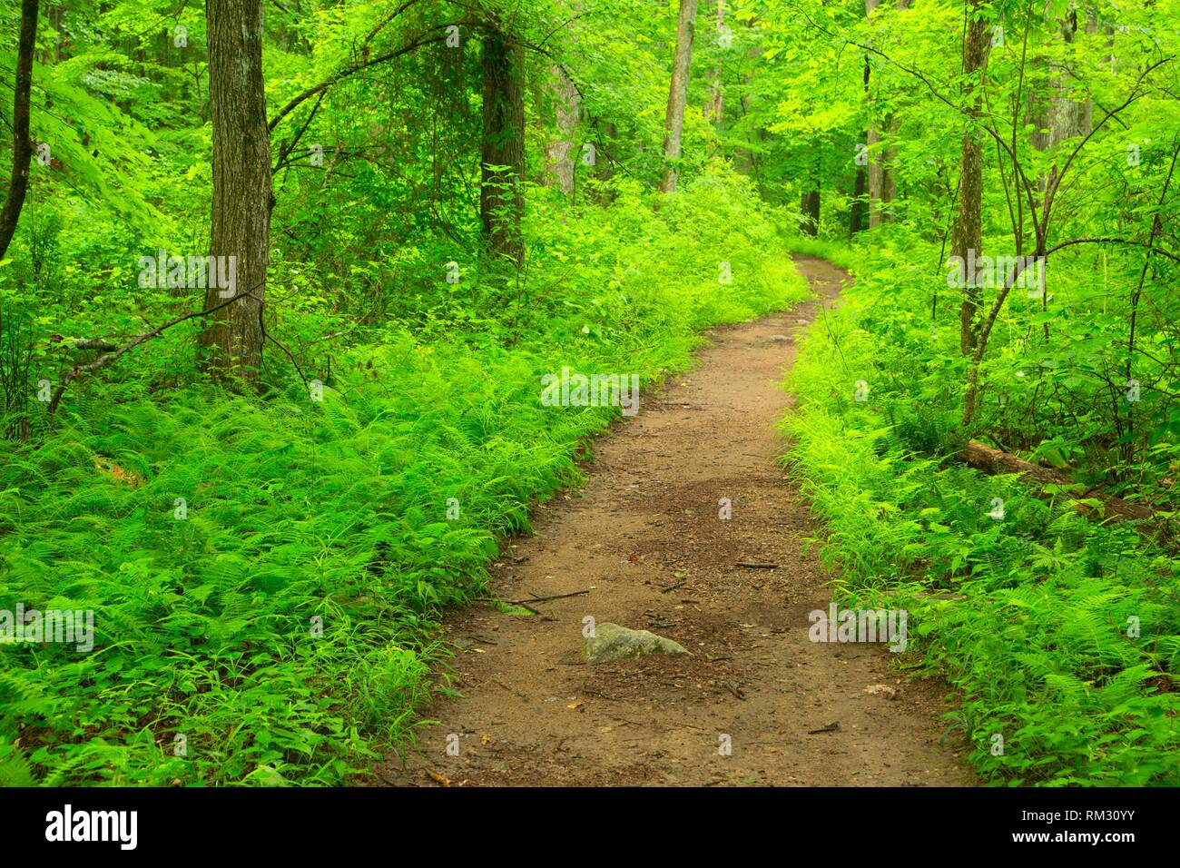 Laurel Trail, Teufel den Bewahren, Connecticut. Stockfoto