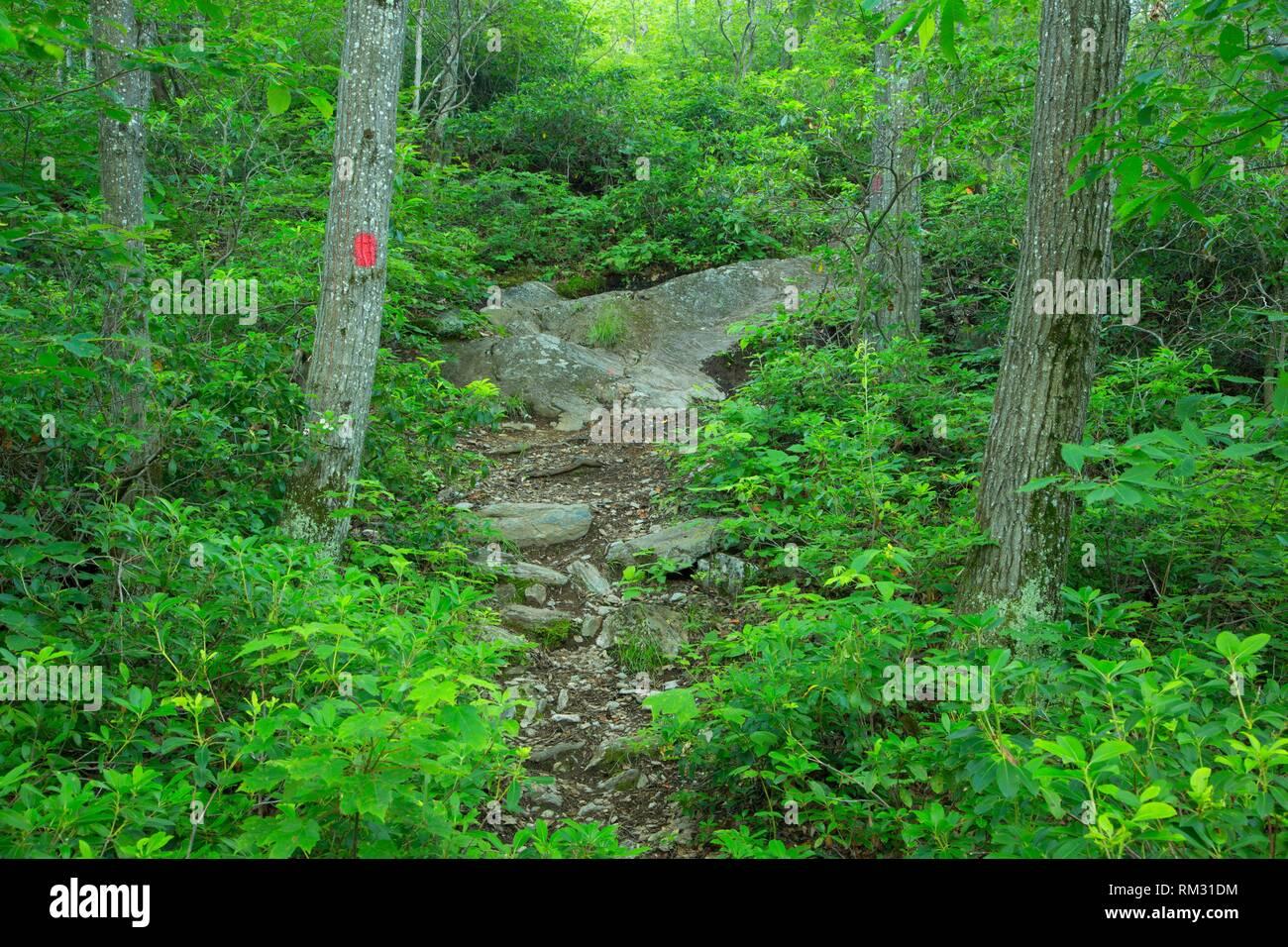 Wald in der Nähe von Tri Point, Litchfield County, Connecticut. Stockbild