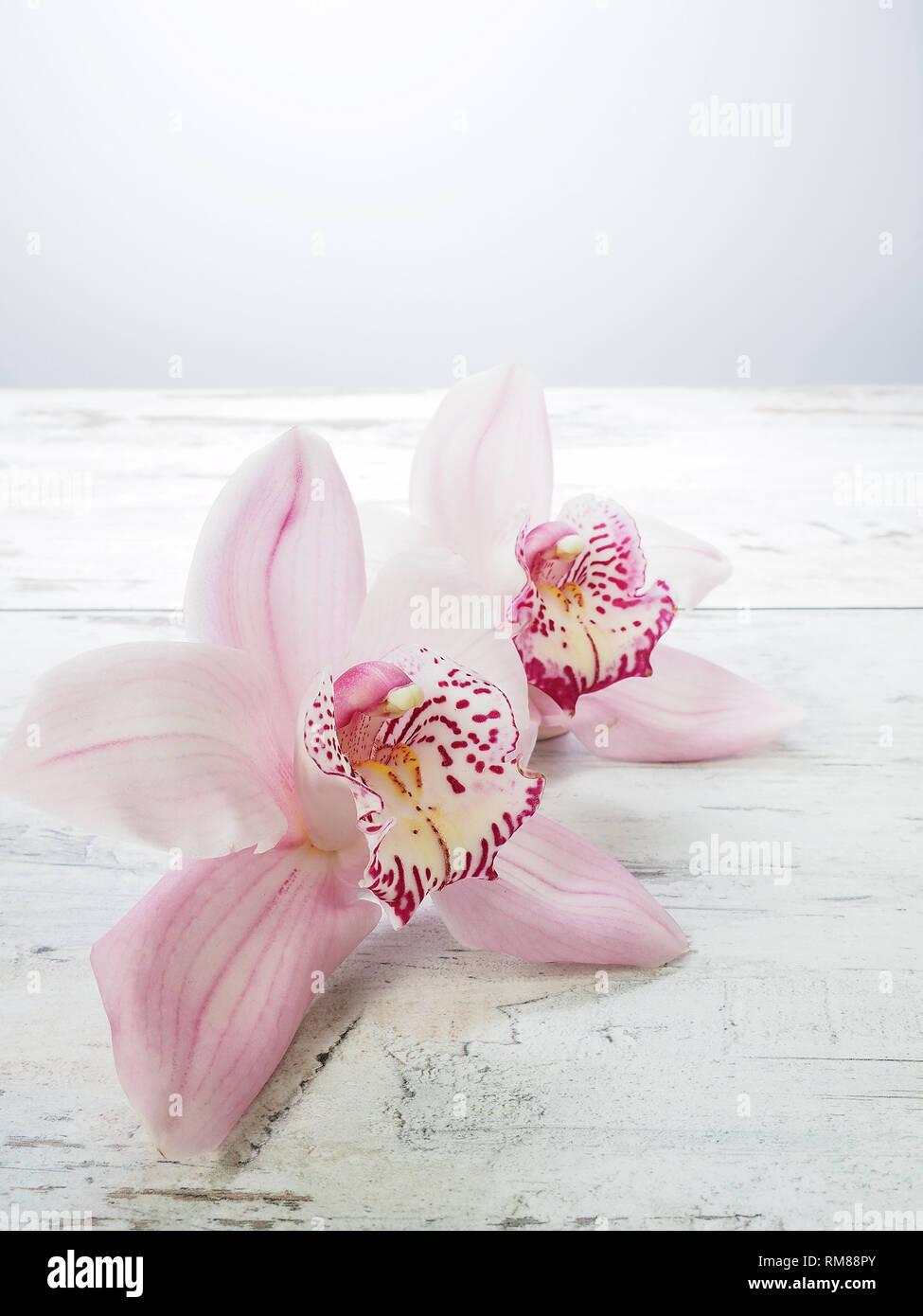 Frische Blumen Orchidee Cymbidium Stockfoto