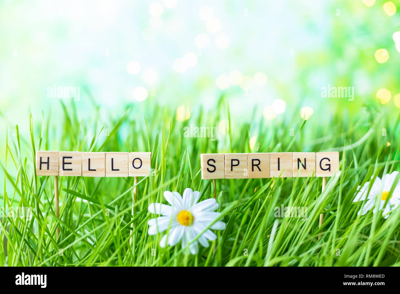 Inschrift Hallo Frühling auf dem Hintergrund des grünen Grases mit Tau Stockbild