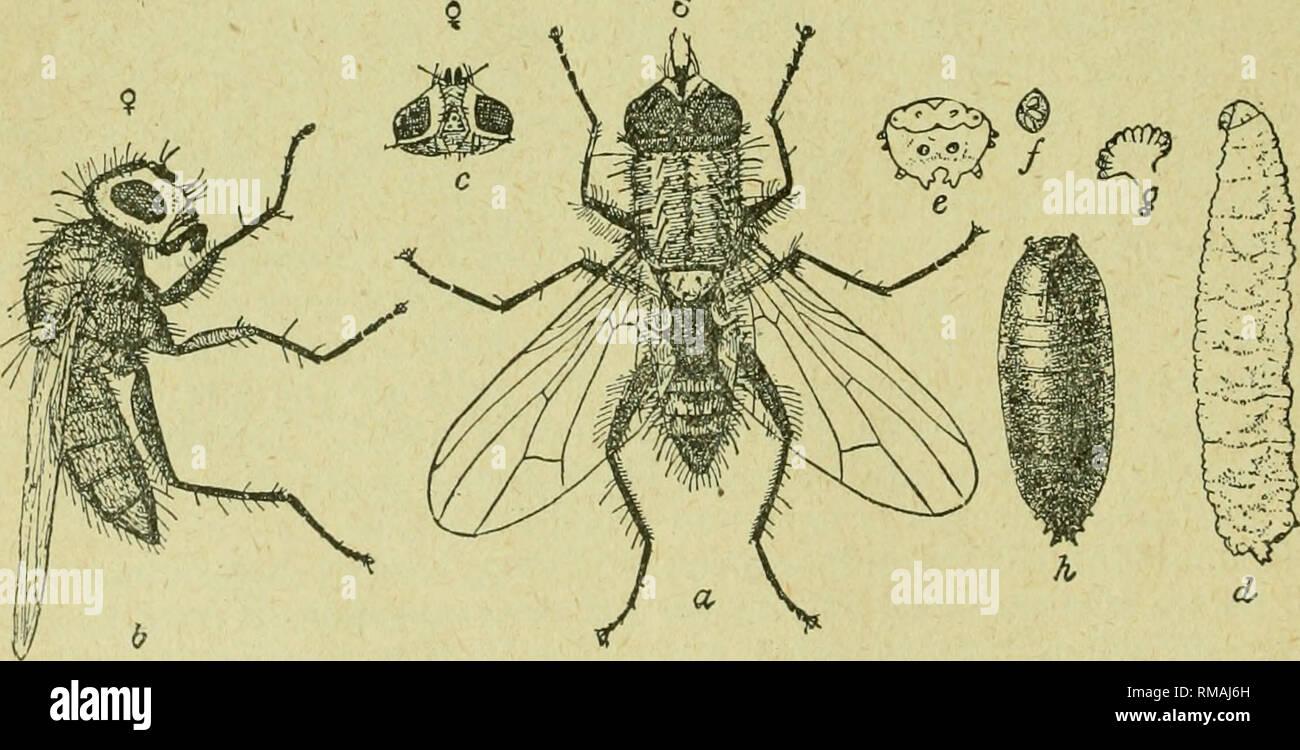 Jahresbericht Entomologischen Gesellschaft Von Ontario Schädlinge