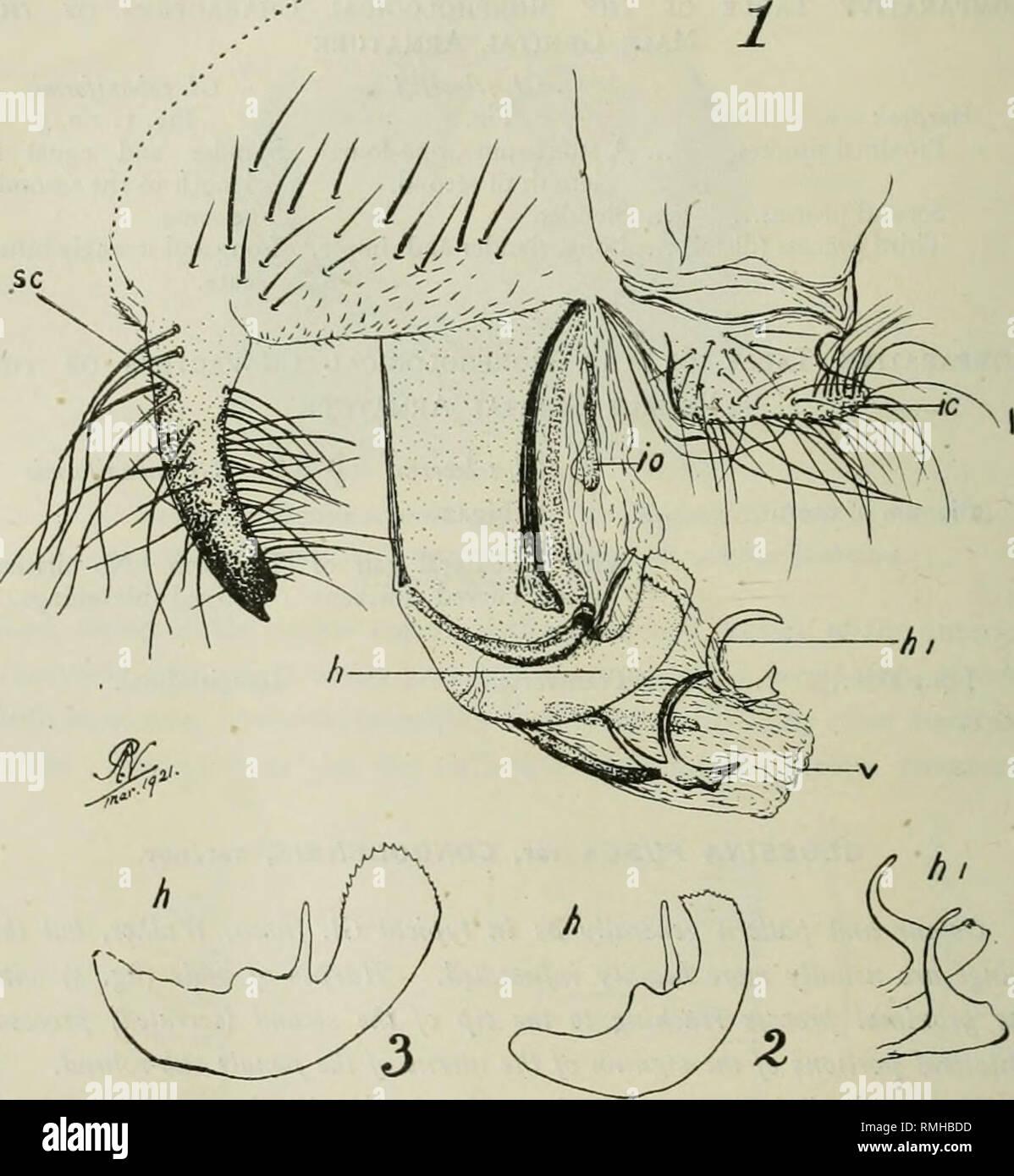 . Annalen Der Tropenmedizin Und Parasitologie. Parasiten. Die Vorstehende  Beschreibung, Und Auch Die IUustrations Die Begleiten Sie Auf Vierzehn  Beispiele ...