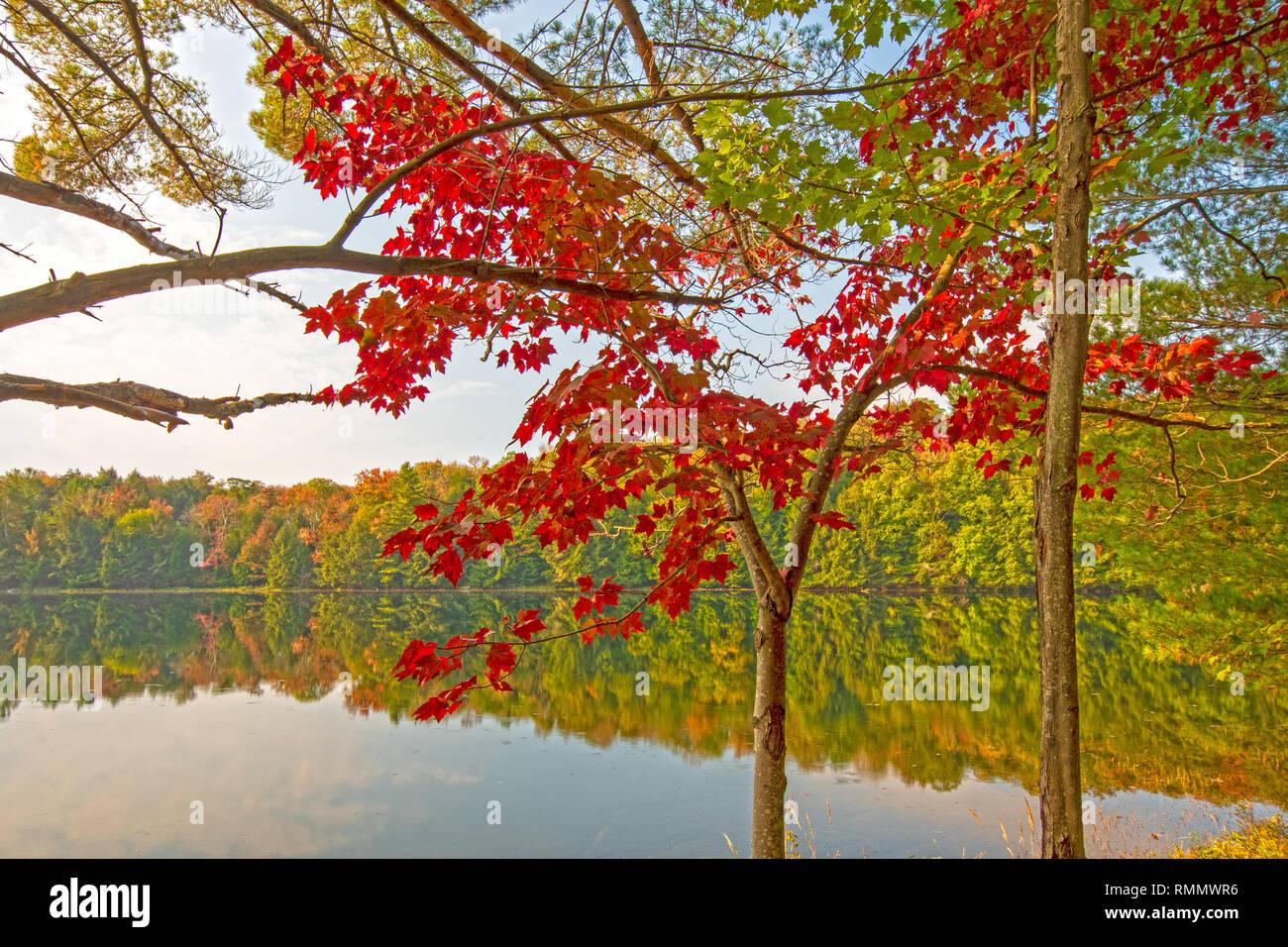 Einen Spritzer rot in den Wald auf die Mayflower See in Arrowhead Provincial Park in Ontario Stockbild