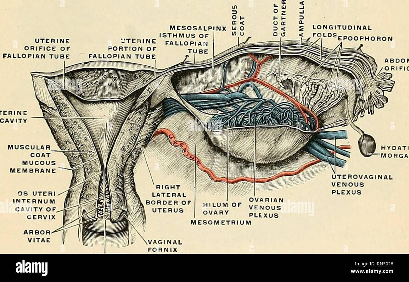 Anatomie muttermund Muttermund Abtasten