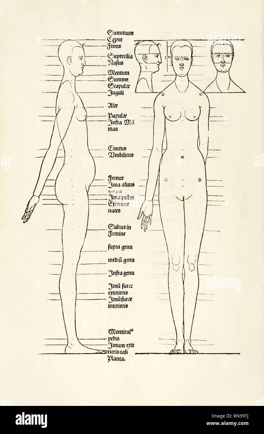 """Weibliche anatomische Holzschnitt aus """"Hierinn Sindh begriffen Vier Bücher von menschlicher Proportion' von Albrecht Dürer (1471-1528) eine Arbeit über den Anteil des menschlichen Körpers, die erstmals in 1528 veröffentlicht. Stockbild"""