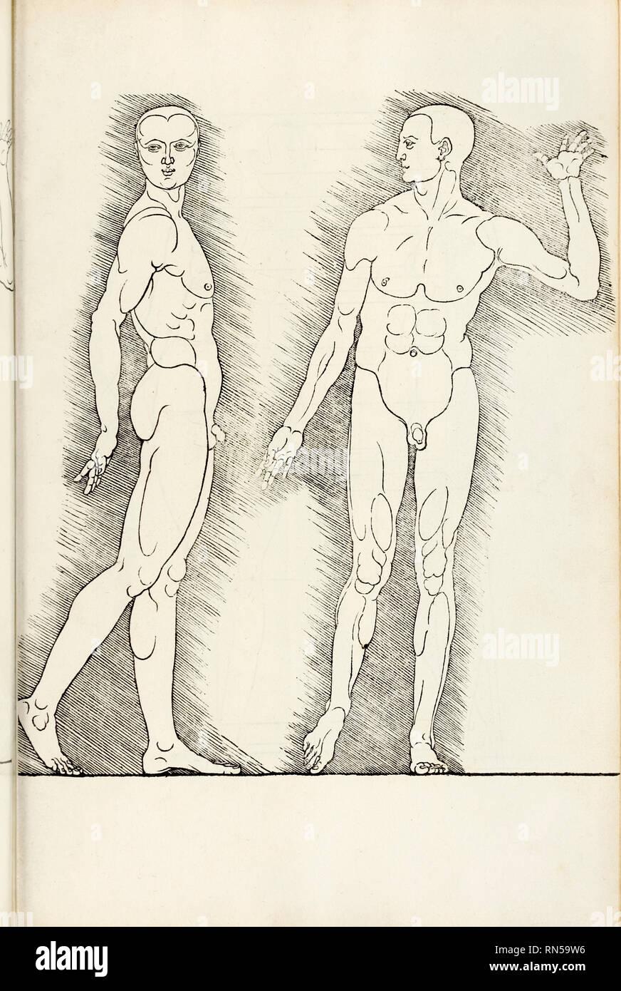 """Anatomische Holzschnitt aus """"Hierinn Sindh begriffen Vier Bücher von menschlicher Proportion' von Albrecht Dürer (1471-1528) eine Arbeit über den Anteil des menschlichen Körpers, die erstmals in 1528 veröffentlicht. Stockbild"""