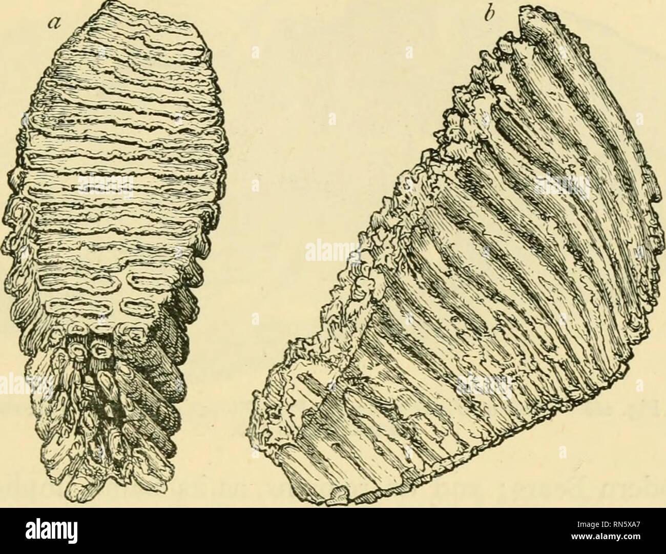 Analogie der Methoden zur Datierung von Gesteinen und Fossilien, die von Paläontologen verwendet werden