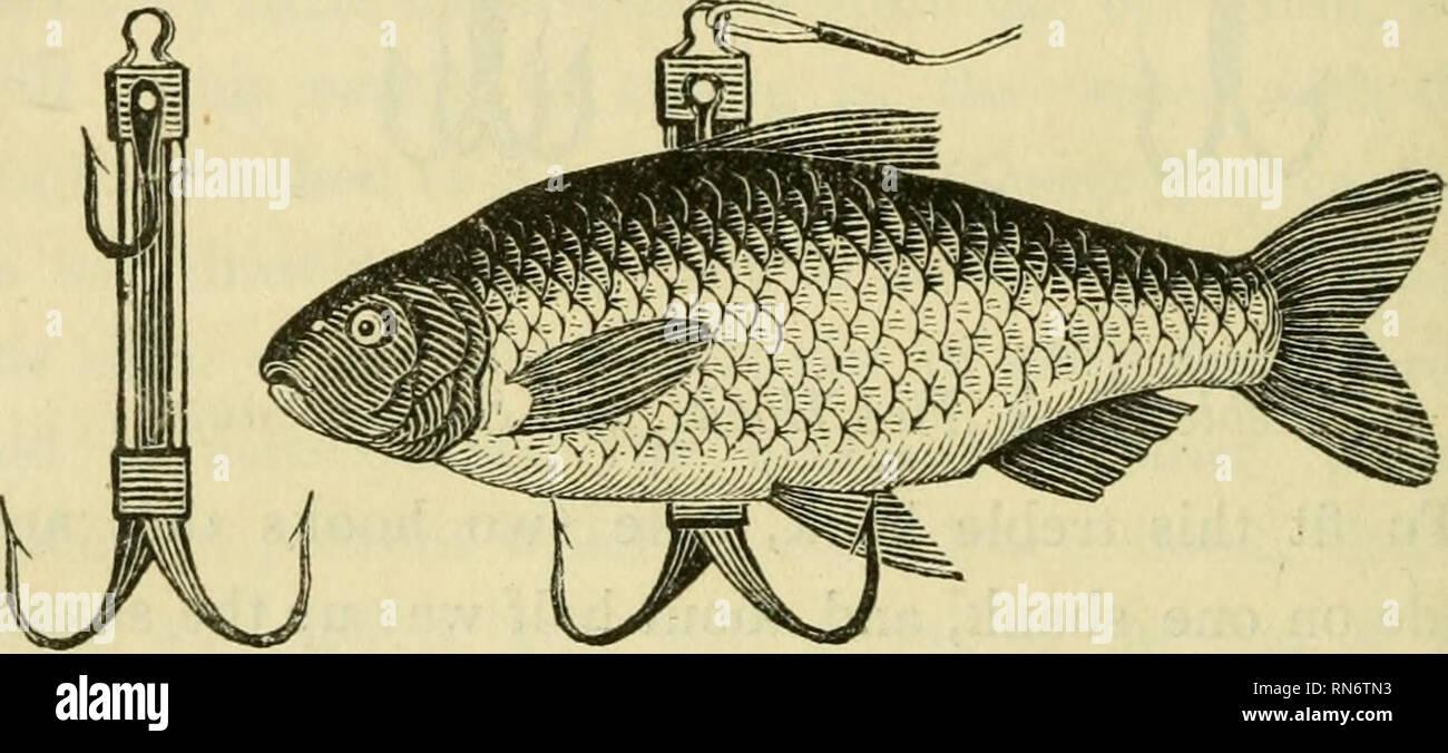 Große Fische kleine Teich-Dating-Website