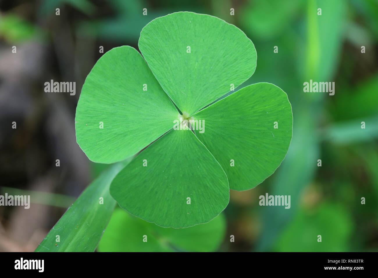 Schloss das Glück Symbol 4-blättrige Kleeblätter im grünen Feld Stockbild