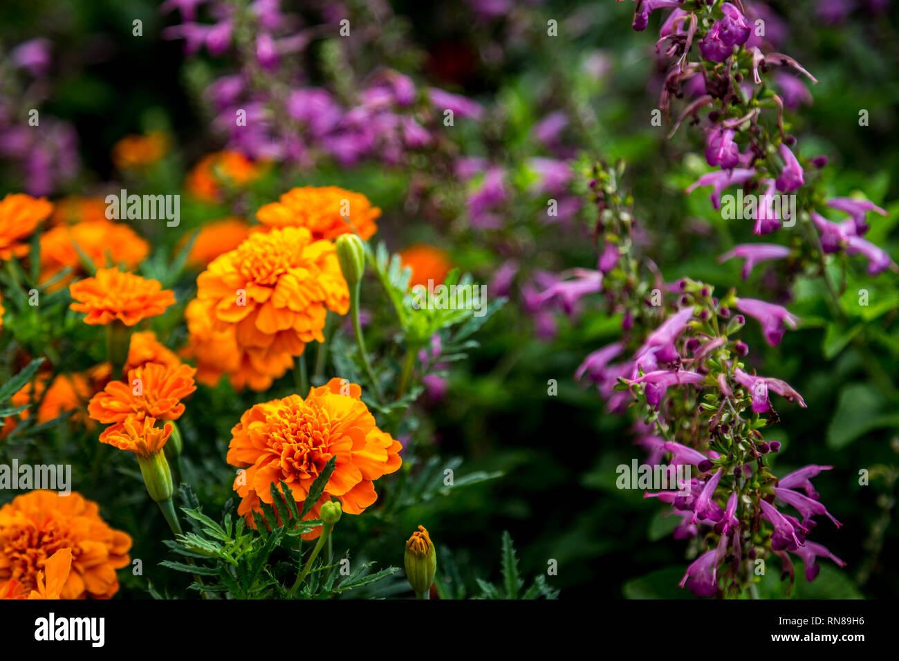 Blumen Ideen Fur Sie Garten Stockfotografie Alamy