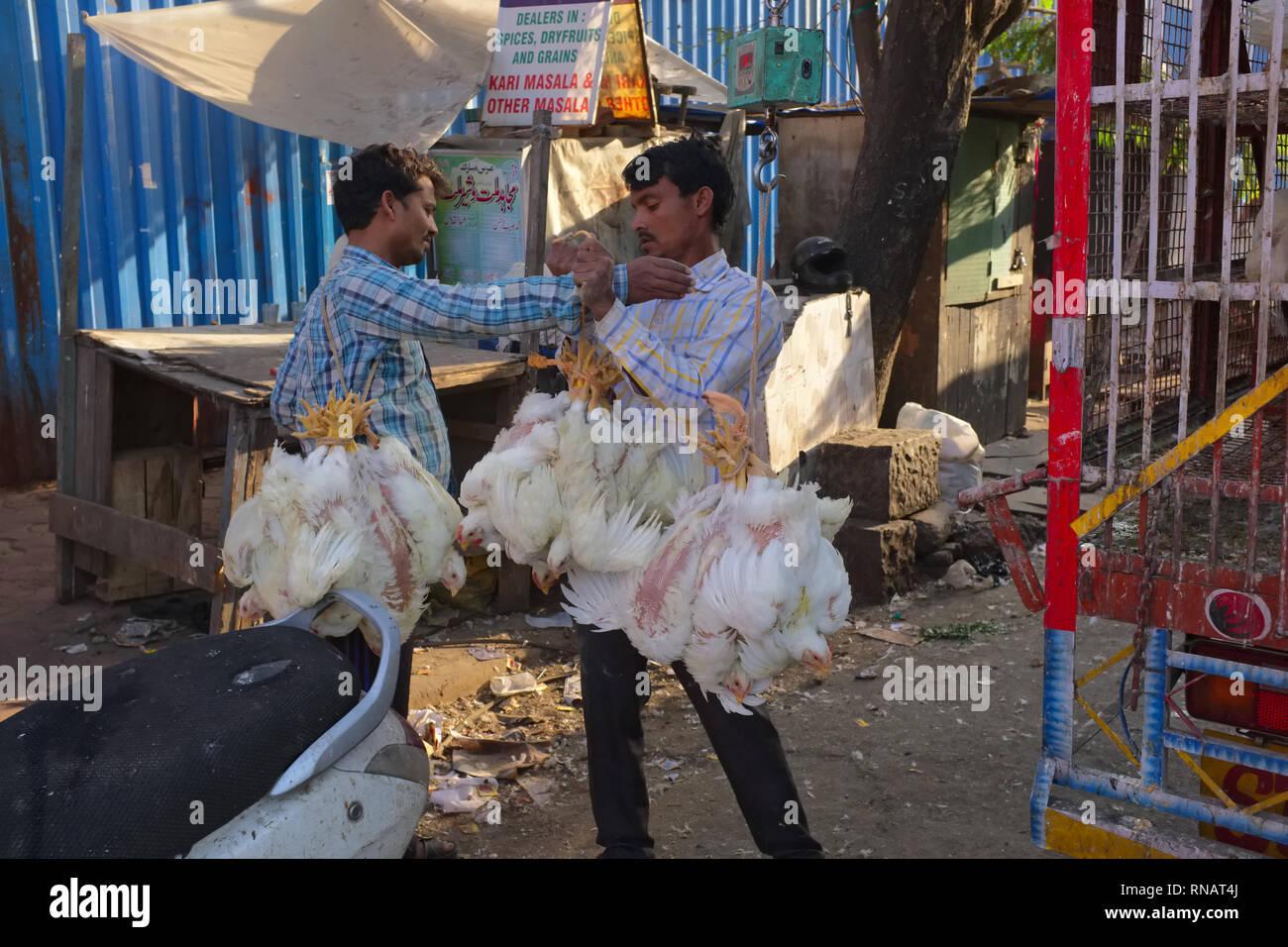 Lebende Hühner gebunden, indem Er ihre Füße und hängen im Bündel sind für Lieferung in einem Fleischmarkt in Bhendi Bazar, Mumbai, Indien Stockbild