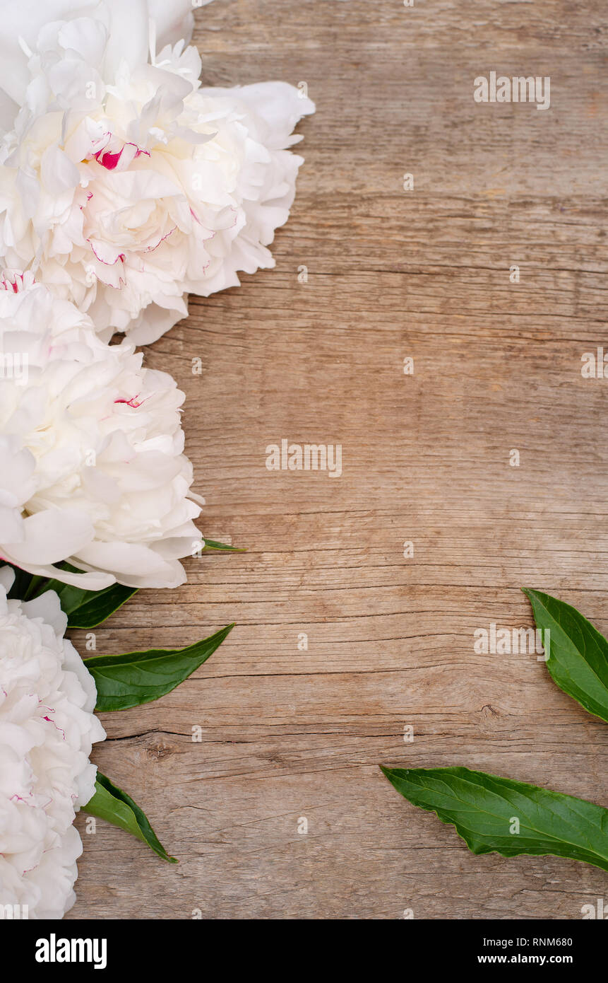 Große, weiße Pfingstrose auf Holz- Hintergrund. Stockfoto
