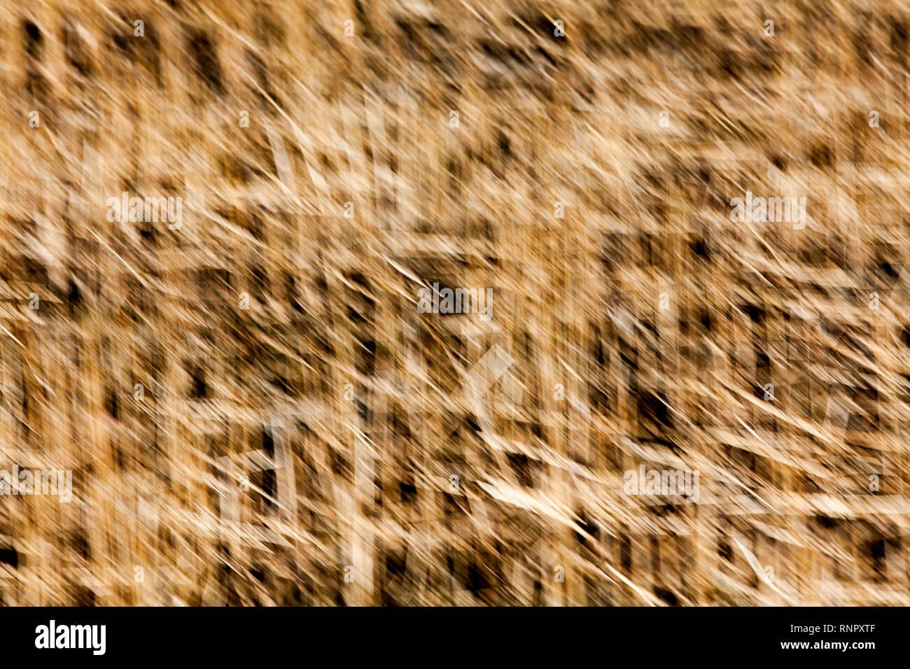 Strukturen in trockenes Gras, Nahaufnahme, mit einer unscharfen Wirkung wischen Stockbild