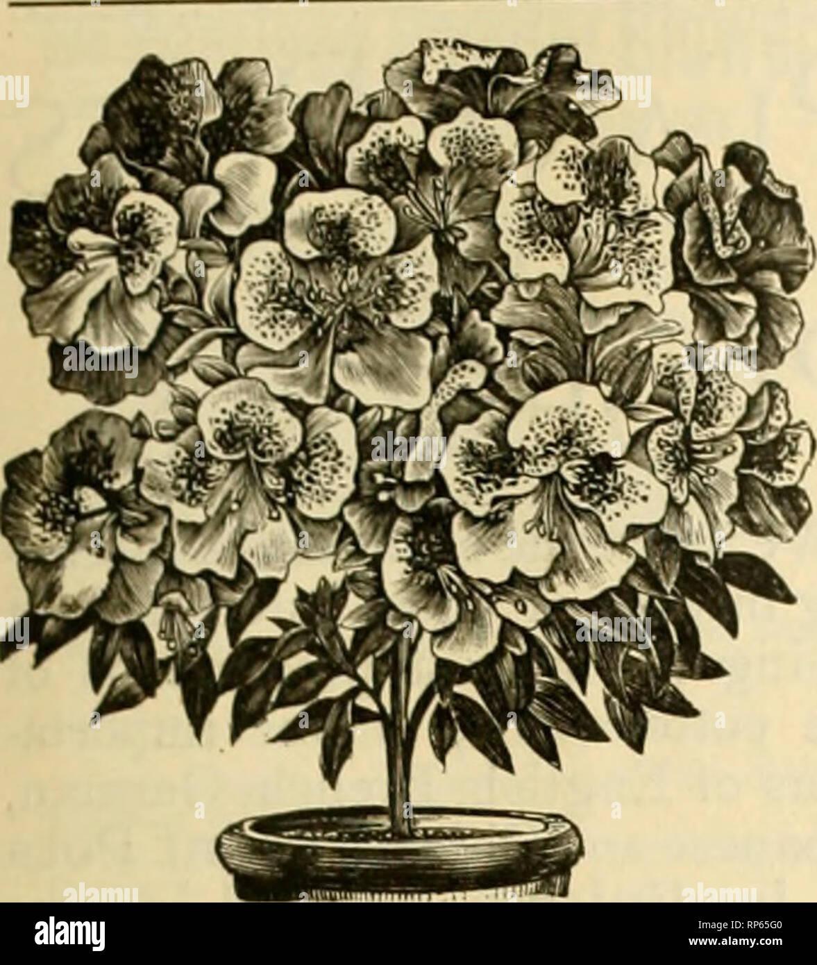Die amerikanische Florist: Eine wöchentliche Zeitschrift für
